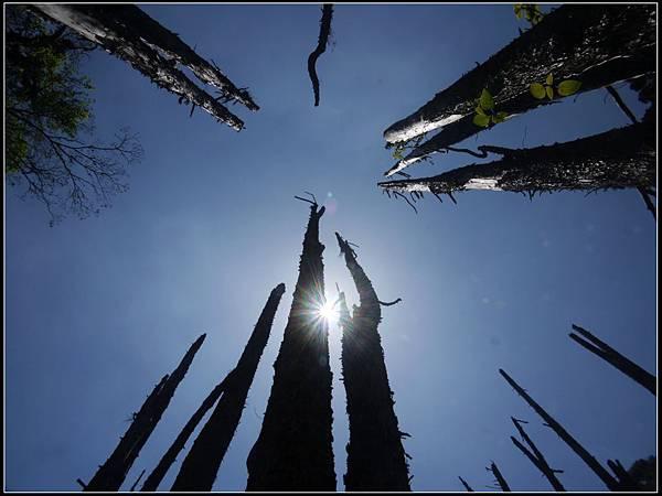 忘憂森林6.jpg