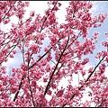 武陵的顏色.jpg