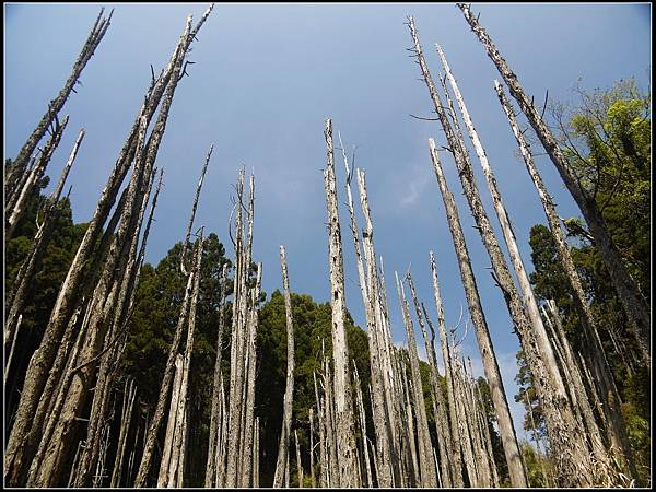 忘憂森林3.jpg
