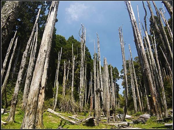 忘憂森林2.jpg