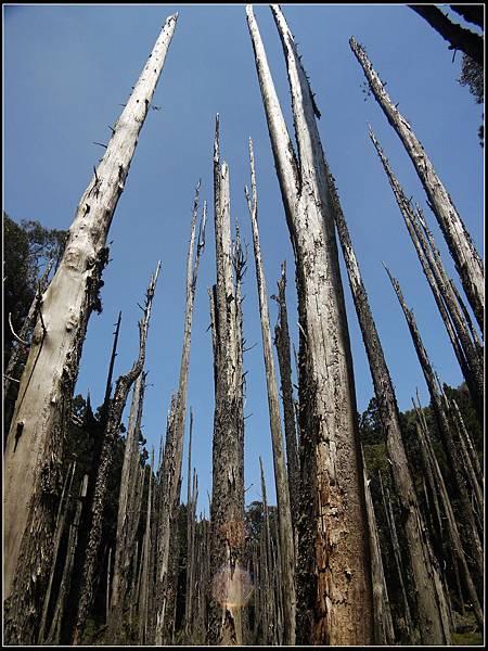 忘憂森林4.jpg
