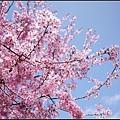 武陵的顏色7.jpg