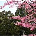 武陵的顏色6.jpg