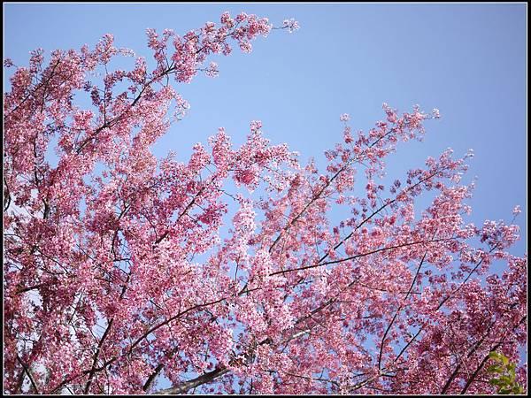 武陵的顏色8.jpg