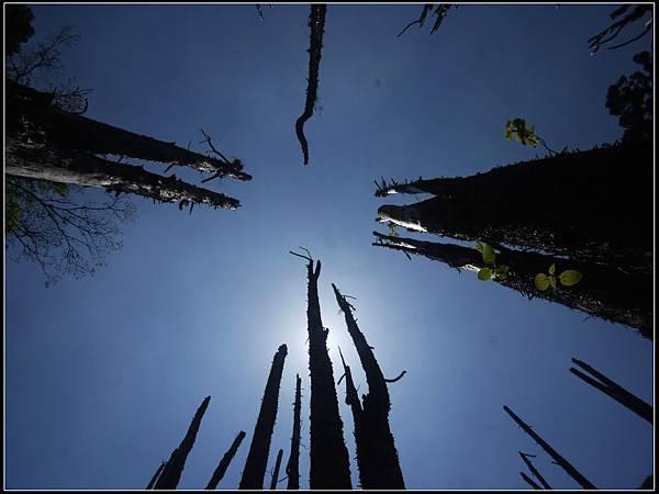 忘憂森林5.jpg