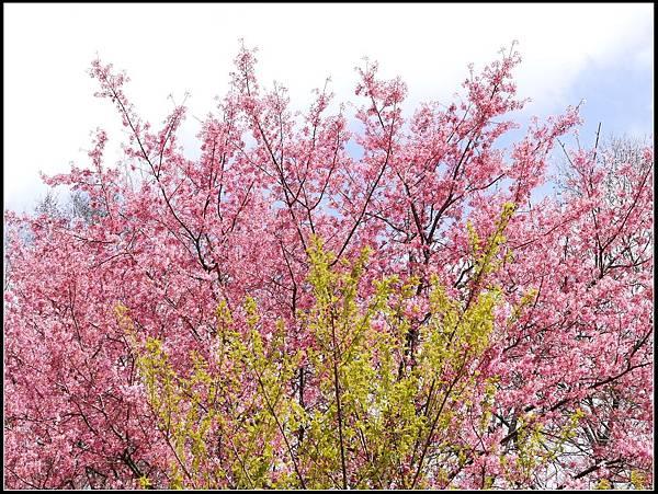 武陵的顏色II.jpg