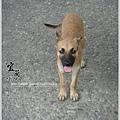 碼頭的狗狗