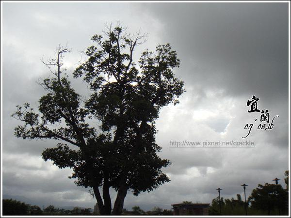 樹4---缺