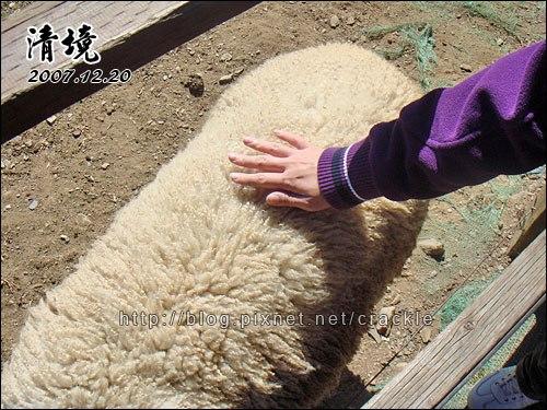 這就是羊毛