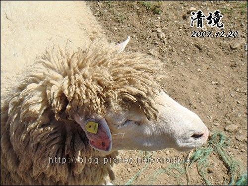 超龐克的羊