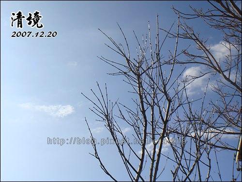 我發現我很愛拍樹枝