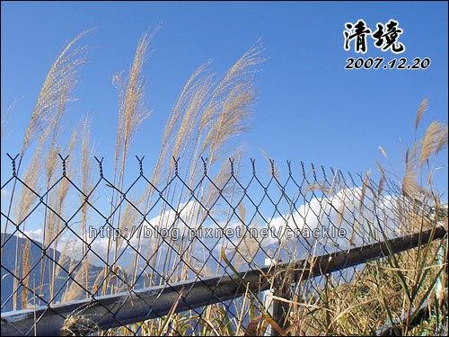 鐵絲網圍欄與蘆葦的默契