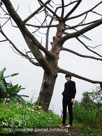 這枯樹是中空的,很酷