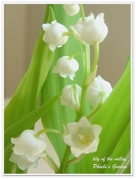lily of the valley 1.jpg