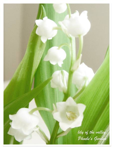 lily of the valley 2.jpg