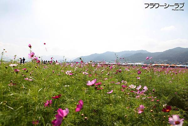 IMG_1538.jpg