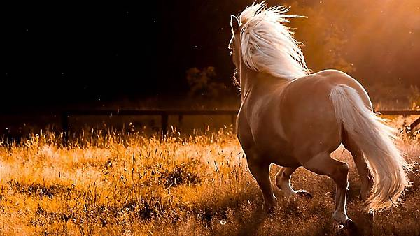 White-Running-Horse-Wallpaper-HD