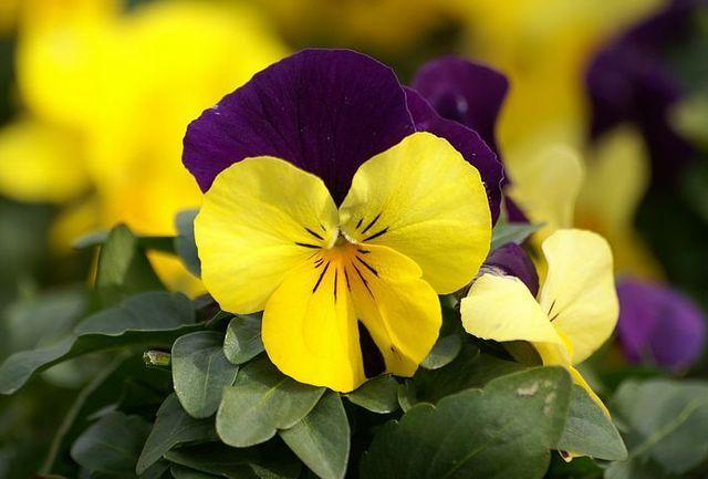 Flower_Market_Flower_show_newflower9640.jpg