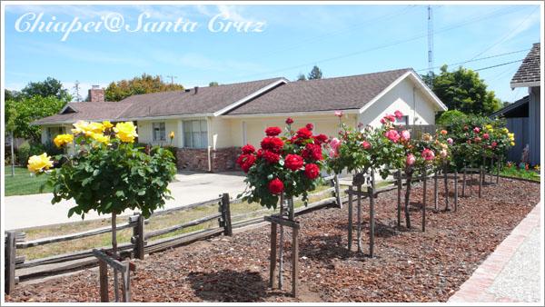 優雅的玫瑰庭園