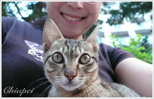 我家巷子裡的小野貓