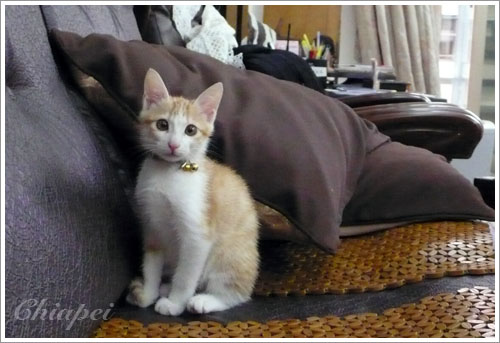 小小貓巧比