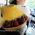 回家前,奶奶幫小牛拿了4顆超大草莓