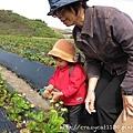 奶奶說爺爺家的草莓比較好吃 :p