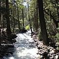 6/26 河流上的樹影交錯很美麗
