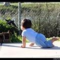 我撲!(小傢伙追鳥的傻勁讓我想起小ㄋㄞ...)