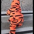 小老虎出動!