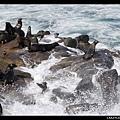 享受SPA的海獅