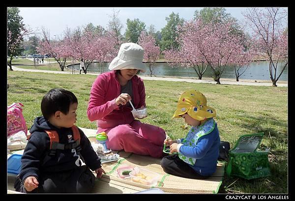 坐在小丘上剛好欣賞河畔美麗的櫻花