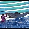 海豚跳上陸地來