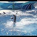 海豚表演站立划水前進