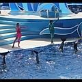 海豚用尾巴向大家說掰掰