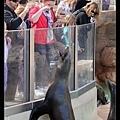 路人買小魚餵海獅