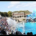 調皮的殺人鯨用尾鰭向觀眾潑水