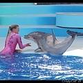 海豚跳上陸地