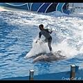 騎在海豚上