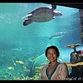 我與海龜合照