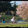 櫻花樹下的小女孩