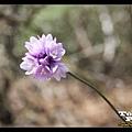 路邊美麗的野花