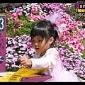 陳小牛和背景的紫花融為一體...