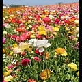 先來幾張花的照片