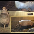 Sea World 有犰狳(armadillo)?!