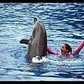 禮拜天的海豚表演和禮拜六略有不同