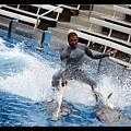 非常穩健的海豚先生