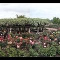 小玫瑰花園