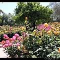 隔了一天,再逛玫瑰園!今天豔陽高照!
