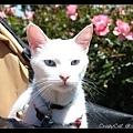 非常俊美的貓咪